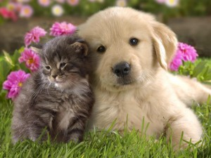puppy-and-kitten